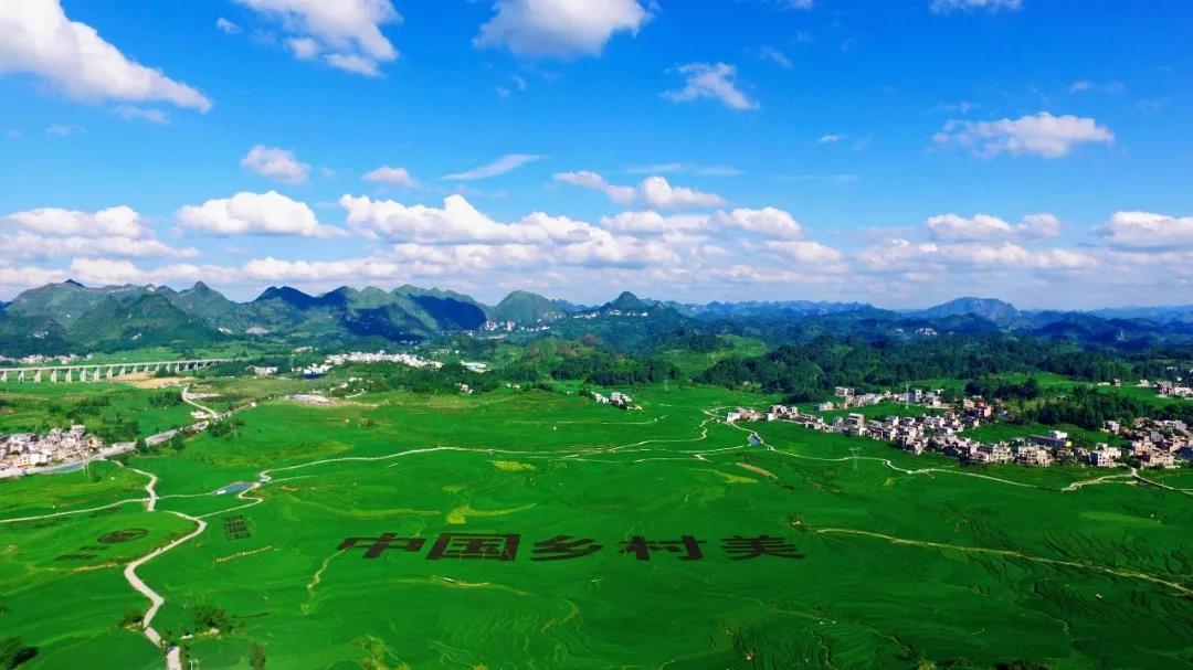 【展团风采回顾】广西河池市农业组团亮相深圳绿博会受商家和消费者青睐