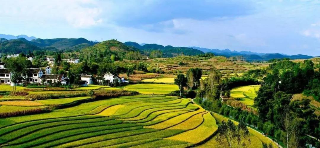 【绿色好心情】从快递到农业,且看顺丰布局农村的变与不变