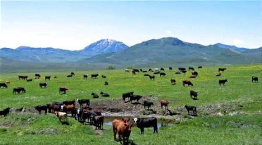 【农业杂谈】假如美国农村没有华为......