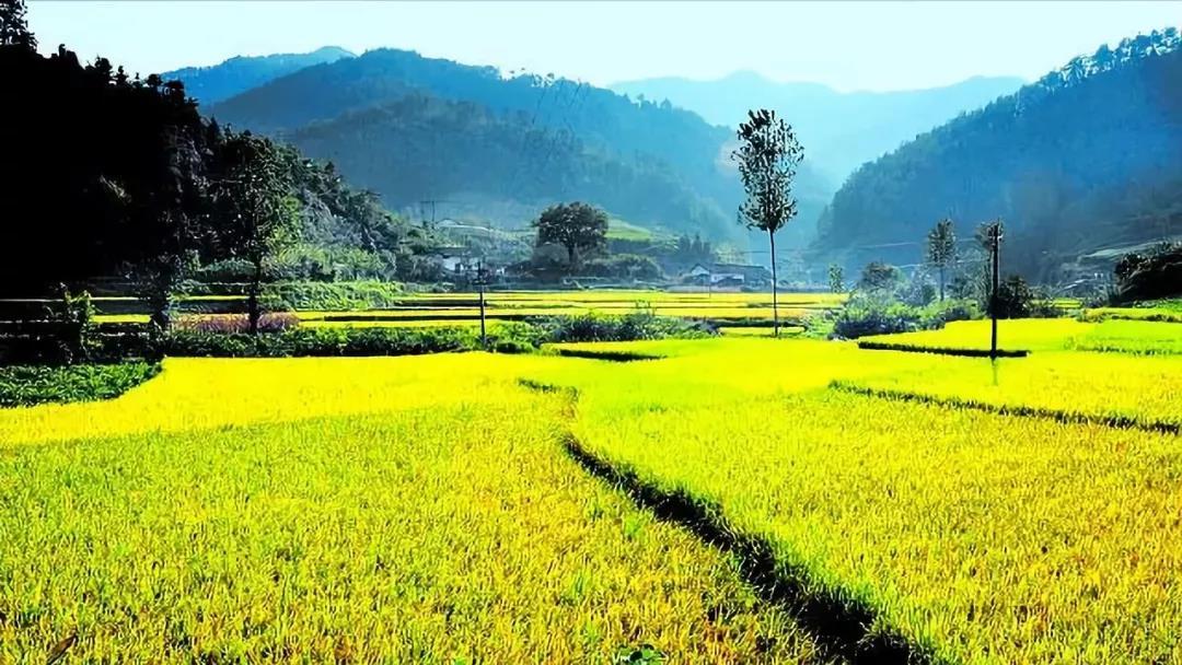 【农业杂谈】如何选择农业投资?投什么?