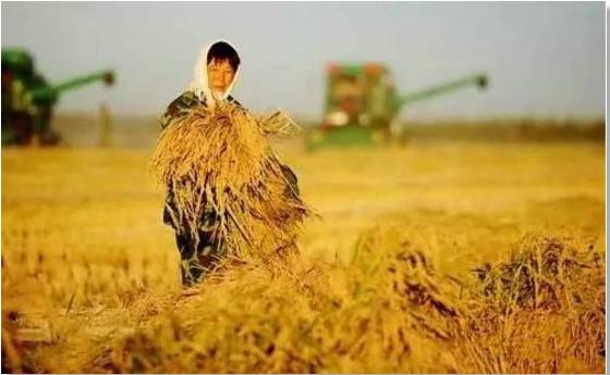 新中国成立70周年农业生产发展成就一览