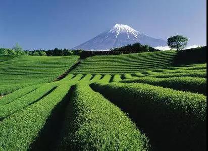 【农业杂谈】农业是如何被颠覆得如此高端,如此精致…