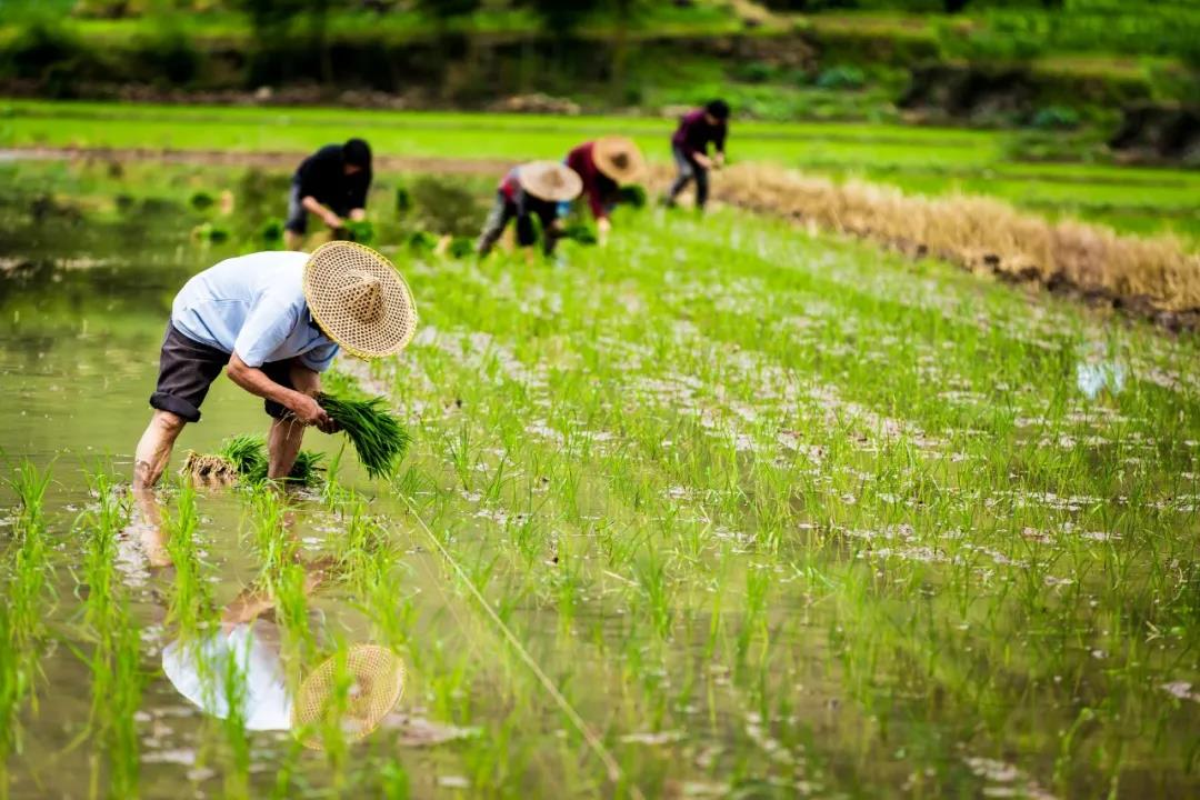 【农业政策解读】2021年农业农村部重点扶持这28个项目!