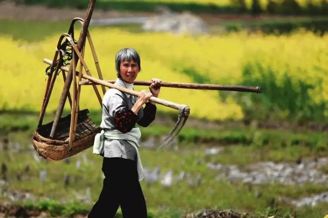 【农业杂谈】未来10年农业改革,将使一半的农民成为农业产业工人