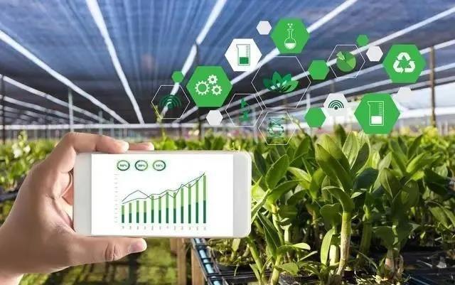 【农业模式杂谈】粮食业数字化转型,转什么?怎么转?答案来了